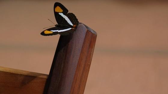 farfalla 2