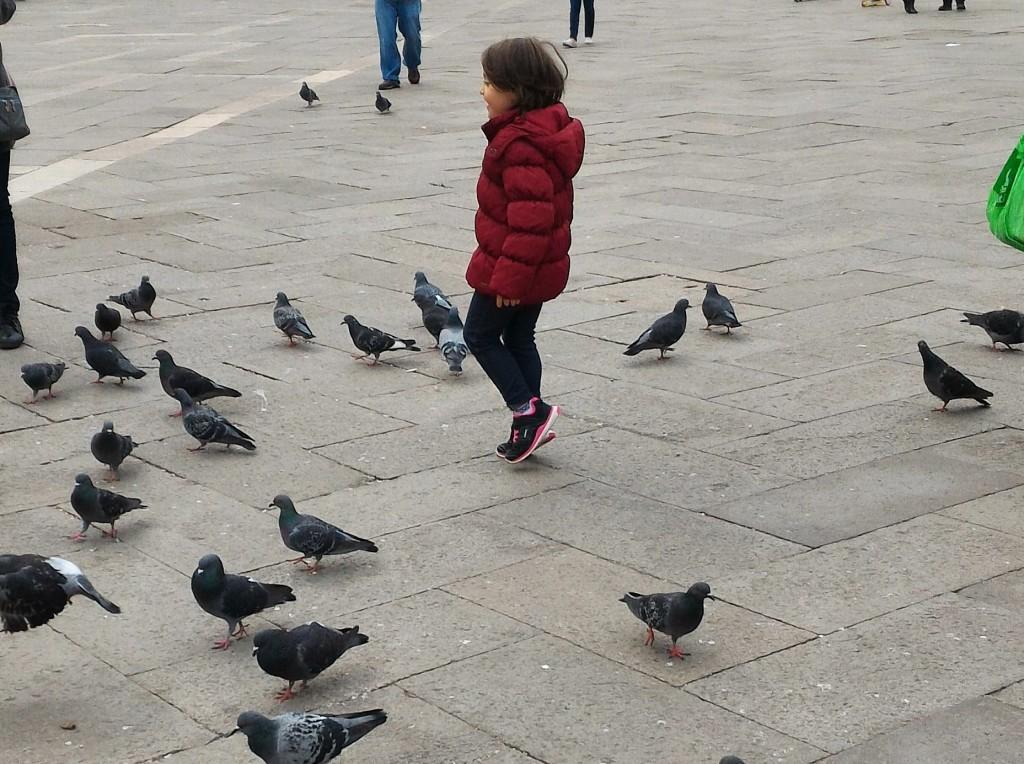 piccioni san marco